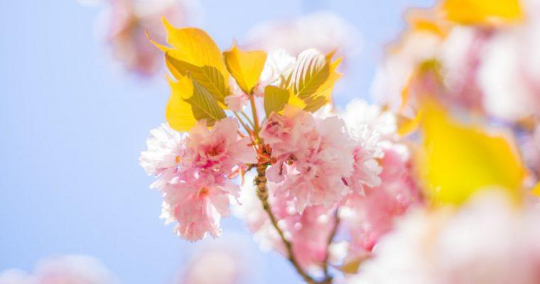 Duminica Floriilor